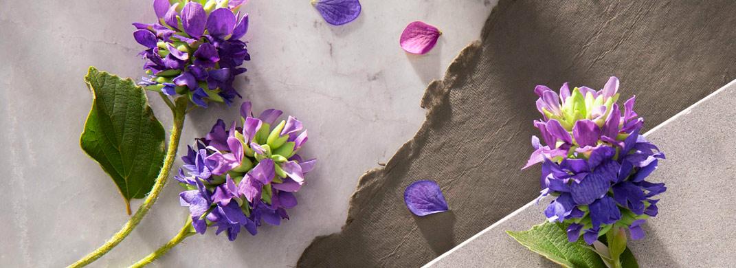 Retinol vegetal, un poderoso cosmético antiedad, el BAKUCHIOL